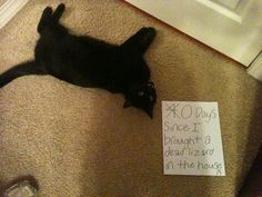 An epic gallery of cat shaming pictures that prove these cats are the naughtiest in the world. A hilarious cat shaming picture gallery. Funny Animal Pictures, Funny Animals, Cute Animals, Humorous Pictures, Animal Funnies, Hamsters, Crazy Cat Lady, Crazy Cats, Cool Cats