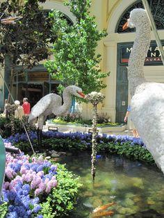 Las Vegas, NV Bellagio Gardens