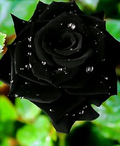 Black with Raindrops