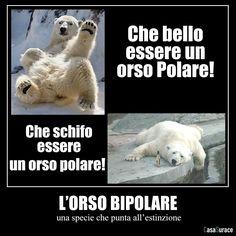 "curiosona: "" L'orso bipolare… fantastico!!! :-D (via Casa Surace) """