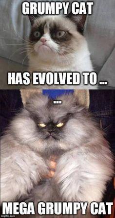Mega grumpy cat #GrumpyCat #GrumpyCatMeme