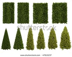 Thuja Isolated On White Background Ilustracje stockowe 47815237 Trees Top View, Tree Pruning, Tree Tops, Cactus Plants, Stock Photos, Cacti, Cactus