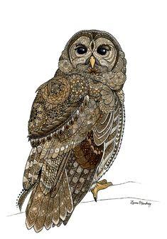 Barred Owl by ZHField.deviantart.com on @DeviantArt