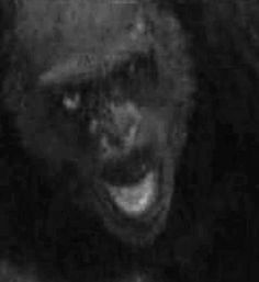 Still photo from trailcam video.I'll tell you what folks.this guy would not let you get away. Judging by his messed up left eye. Yeti Bigfoot, Bigfoot Sasquatch, Creepy Catalog, Bigfoot Pictures, Giant People, Finding Bigfoot, Bigfoot Sightings, Mothman, Cryptozoology