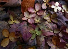 This Ivy House  - greenreblooming:   Early autumn by zsaj