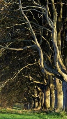 Tangle of branches, Dorset, England