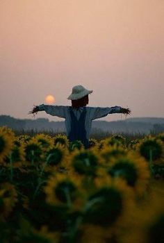 Sunflowers and Scarecrow