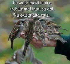 True Words, Spiritual Quotes, Cool Words, Spirituality, Bird, Awesome, English Phrases, Hearts, Spirit Quotes
