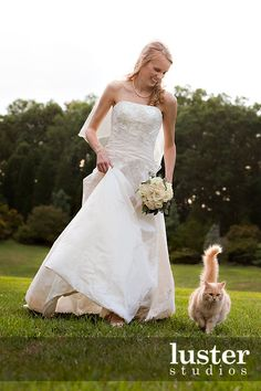 Image result for cat on wedding train