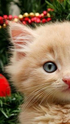 """In a cat's eye all things belong to a cat."" --British Proverb"