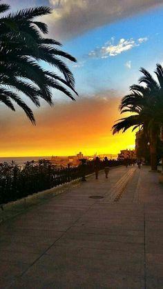 Passeig de les palmeres. Tarragona. Catalunya