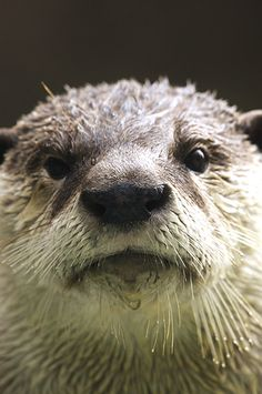 Otter, you have a drop of water on your chin - and your whiskers! - June 6, 2013