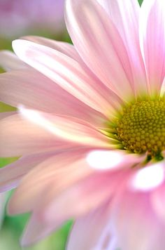 Miss Daisy Photograph by Deb Halloran - Miss Daisy Fine Art Prints and Posters for Sale fineartamerica.com