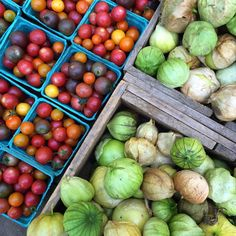 Deering Oaks Farmer's Market | Portland, Maine
