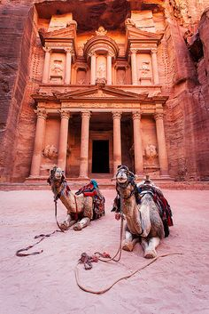 Ancient Petra in Jordan #Camels