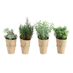 Gracie Oaks 4 Piece Artificial Ficus Desktop Plant in Paper Wrapped Pot Topiary Plants, Boxwood Topiary, Ivy Plants, Potted Trees, Real Plants, Foliage Plants, Faux Plants, Indoor Plants, Boxwood Hedge