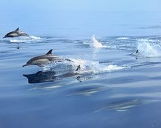 Dreaming of dolphins | Flickr - Photo Sharing!