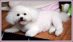 http://www.silvieon4.com/2012/12/tasty-tuesday-back-to-basic-dog-fail.html