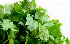 Let's Talk About CILANTRO!    Learn the benefits of cilantro and find an awesome recipe for guacamole inside this blog.     www.munezaahmed.com