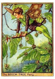 The Beech Tree Fairy Cicely Mary Barker