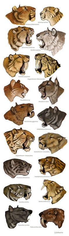 Evolution by FelineFire.deviantart.com