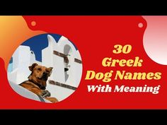 30 Best Greek Dog Names With Meaning 2021 ! Unique Pappy Names - YouTube Unique Female Dog Names, Girl Dog Names Unique, Beautiful Dog Names, Dog Names Male, Cute Names For Dogs, Pet Names, Cool Names, Boy Puppy Names, Police Dog Names
