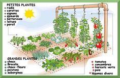 Turn Your Patio Into A Voluminous Vegetable Garden Eco Garden, Edible Garden, Dream Garden, Garden Plants, Smart Garden, Plan Potager, Potager Bio, Organic Gardening, Gardening Tips