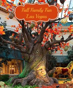 fall travel and fun on pinterest mickey halloween party pumpkin patches and fall family. Black Bedroom Furniture Sets. Home Design Ideas