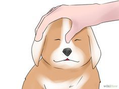 Help Your Dog After Giving Birth Step 8.jpg