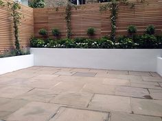 Low white rendered wall with horizontal wooden wall above it - clean crisp finish softened by planting