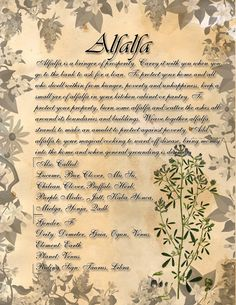 Book of Shadows: Herb Grimoire- Yarrow by CoNiGMa on DeviantArt Magic Herbs, Herbal Magic, Witch Herbs, Wiccan Spells, Witchcraft Herbs, Wiccan Rede, Wiccan Books, Wiccan Witch, Daisy