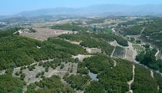 avocado farms in southern california - Google Search