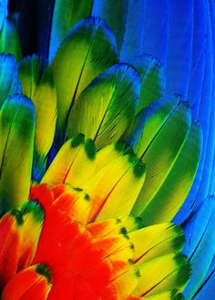 www.floramazona.com...  ~Parrot Feathers.