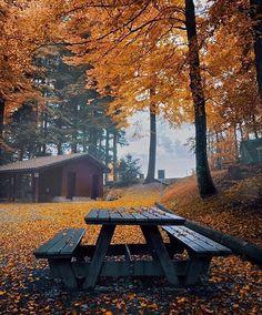 Autumn in Switzerland. Photography by @golden_heart #animalshowhd