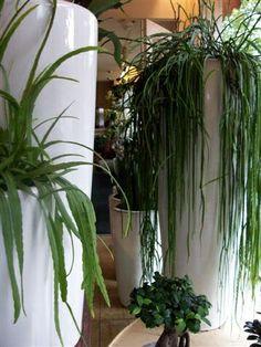Naast bloemen bestaat het assortiment bij bloemenwinkel van Gurp ook uit aardewerk vazen.