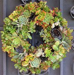 Martha Stewart succulents | Succulent Cactus Wreath