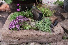 Betonfad med planter
