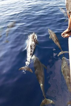 Dolphin Tour Onong Resort Siladen Celebes Divers #diving #indonesia