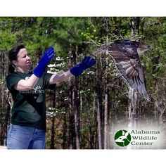 Ever wonder what it would be like to volunteer with the crew of generous dedicated people who care for the amazing birds that come through the Alabama Wildlife Center? Here's your chance to find out! Come to our New Volunteer Orientation on Sunday September 6 from 2-4pm!  Open 365 days a year with free admission the #Alabama Wildlife Center is the state's oldest and largest #wildlife rehabilitation and #education facility a champion for native #birds since 1977. We receive almost 2000 avian…