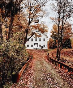 New Nature Photography Leaves Travel Ideas Autumn Aesthetic, Up House, Autumn Photography, Travel Photography, Autumn Inspiration, Fall Season, Cabana, Fall Halloween, Autumn Leaves