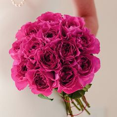 Rose breeders dedicated to creating the finest wedding and event roses, distinguished by their beautiful flower forms and fragrance. Pear Drops, David Austin, Jessie, Hue, Beautiful Flowers, Fragrance, Bloom, Pure Products, Bridal