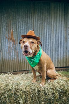 Don't miss out on this perfect boy, head over to read more about him right now! Solomon is looking for his forever family in the Portland, Oregon area.