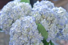 Beautiful blue hydrangeas: classy and chic for a baby boy shower