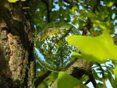 Glaskugel im Ginkgo-Baum, Glaskugel-Fotografie von Barbara Hilmer-Schroeer