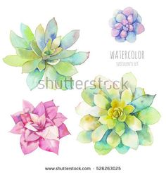 Watercolor succulents set. Hand drawn floral elements isolated on white background. Modern botanical clip art for eco friendly, fashion, rustic design