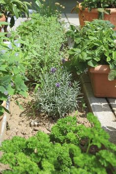 Herb Garden Design – Choosing A Site For Your Herb Garden | 1000#choosing #design #garden #herb #site Herb Garden Pallet, Herb Garden Design, Garden Design Plans, Pallets Garden, Vegetable Garden, Herbs Garden, Wooden Garden, Champs, Small Herb Gardens