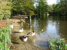 Swan Lake Iris Gardens Sumter, SC