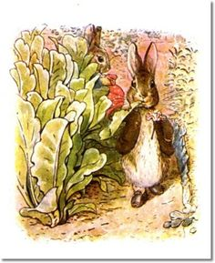 beatrix-potter-the-tale-of-benjamin-bunny-1904-benjamin-eats-lettuce-with-peter-in-background.jpg (407×500)