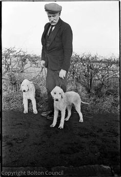 Bedlington Terriers photographed by Humphrey Spender. A man with two Bedlington terriers at the side of a country lane. This photograph was taken during Mass Observation's visit to meet the Pitmen painters of Ashington in Northumberland in Terrier Dog Breeds, Hound Dog, Terriers, Small Dog Names, Small Dogs, Jack Russell Dogs, Black And White Dog, Dog Facts, Companion Dog