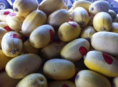 How to grow squash in your garden